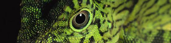 header_reptile3