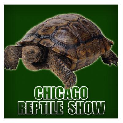 CHI Reptile Show